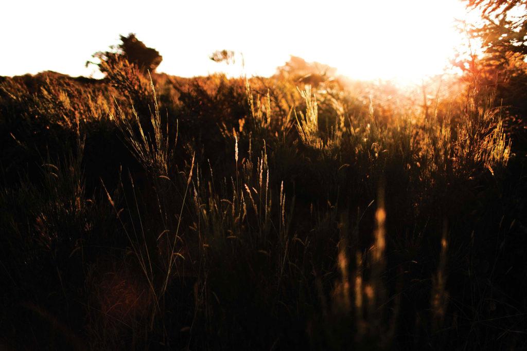 Light shining on a grass field.